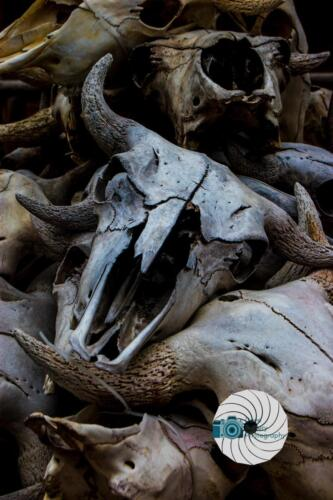 Bison Skull Pile - Dave Buttery Photography