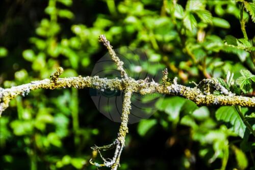 Lichen - Dave Buttery Photography