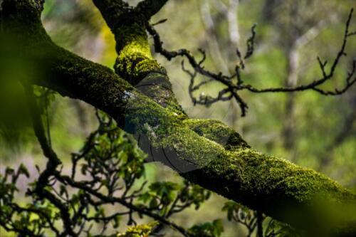Moss & Lichen - Dave Buttery Photography
