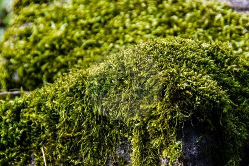 Moss - Dave Buttery Photography