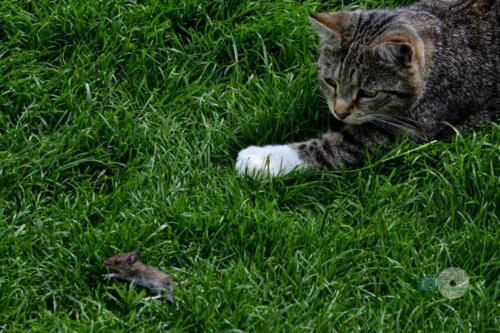 Cat n Mouse3